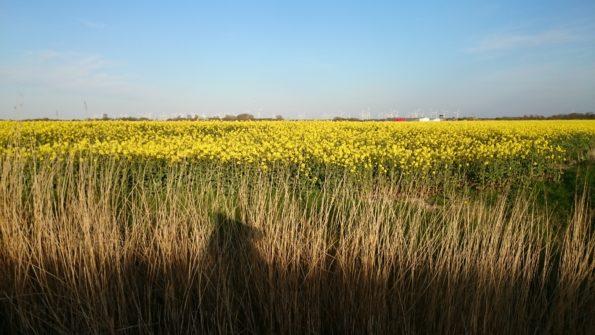 Ferienwohnung Hausrosengarten Hage Ostfriesland Hilgenriedersiel
